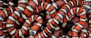 snakesinthegrass